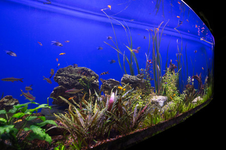 reefscape: Photo of a tropical fish on a coral reef in an aquarium