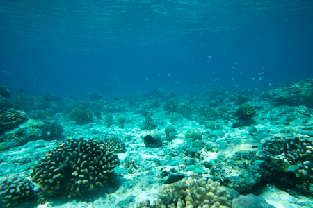 Tranquil underwater scene with copy space Stock Photo