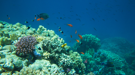 below: Tranquil underwater scene with copy space Stock Photo