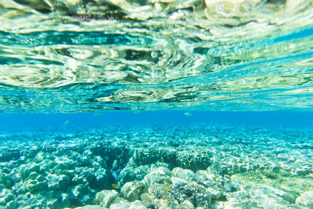 beneath the surface: Tranquil underwater scene with copy space Stock Photo