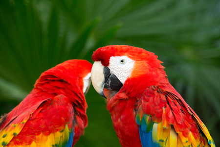 periquito: pájaro del loro sentado en la percha