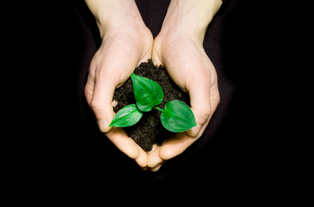 replant: Hands holding sapling in soil on black Stock Photo