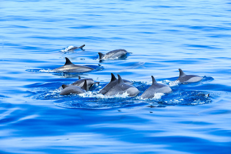 happy dolphins in the water Stock Photo