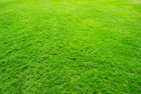 grass texture from a field