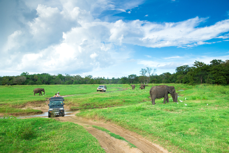 Minneriya, Sri Lanka - Mach 14, 2017: Tourist make game drive in Mynneriya national park. This park is famous to spot herds of wild asian elephants (specie elephas maximus maximus) Editorial