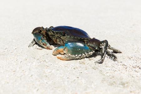 crab on beach Stock Photo