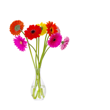 gerbera flower closeup on white background Stock Photo