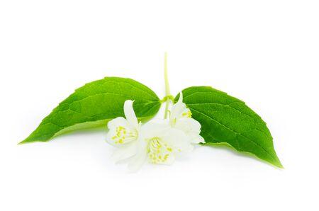 beautiful flowers of jasmine on white Stock Photo