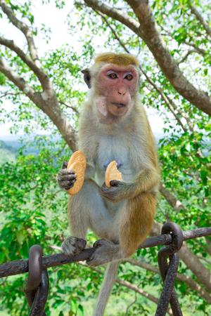 monkey on a tree Stock Photo