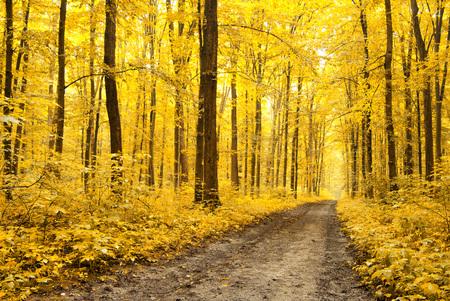 gevallen bladeren in de herfstbos Stockfoto