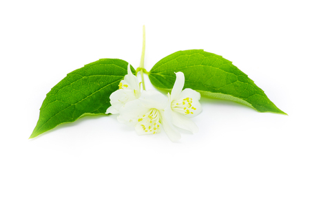 beautiful flowers of jasmine on white Imagens