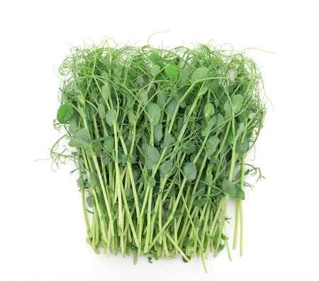 Green pea sprouts isolated on white Stock Photo