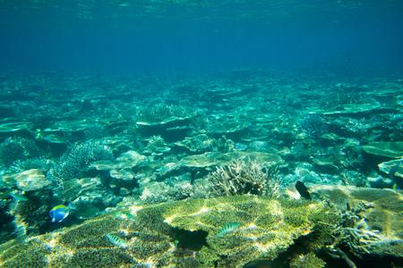 underwater scene with copy space Stock Photo