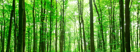 forest trees. nature green wood sunlight backgrounds