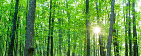 Forest trees. nature green wood sunlight backgrounds Stock Photo