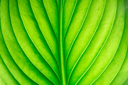 green leaf as background Stock Photo - 106359880