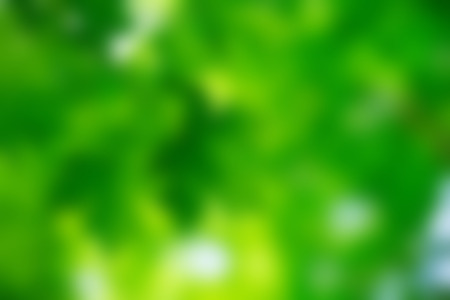 Green bokeh background and sunlight