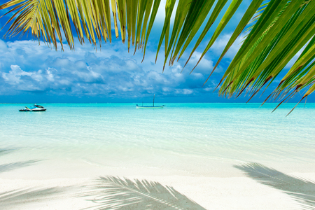 tropical beach in Maldives with few palm trees and lagoon Stock Photo