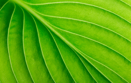 green leaf as background