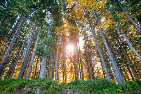 Autumn forest on sunny day Stock Photo