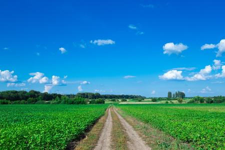 campo de hierba y cielo perfecto