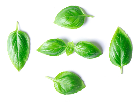 Green basil leaves isolated on white background 写真素材 - 121205678