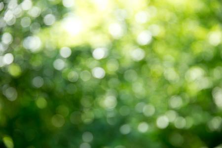Sfondo verde bokeh e luce solare