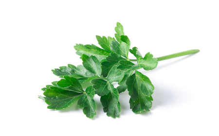 Parsley herb isolated on white background. Stok Fotoğraf
