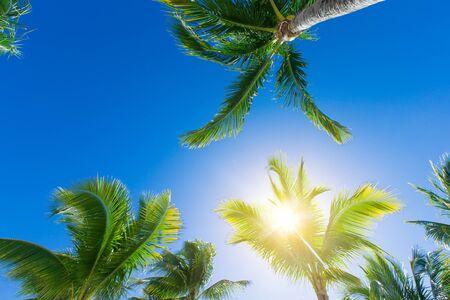 Coconut palm trees, beautiful tropical background Banco de Imagens