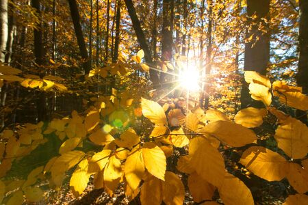 Autumn forest on sunny day . autumn leaf Banco de Imagens