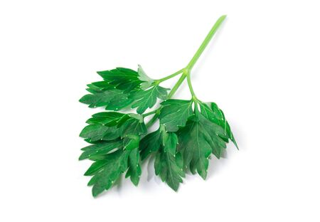 Parsley herb isolated on white background. 스톡 콘텐츠