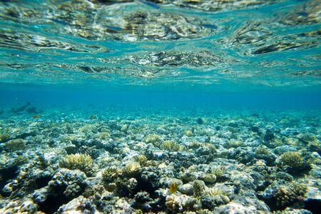 Underwater world panorama. Coral reef ocean light under water
