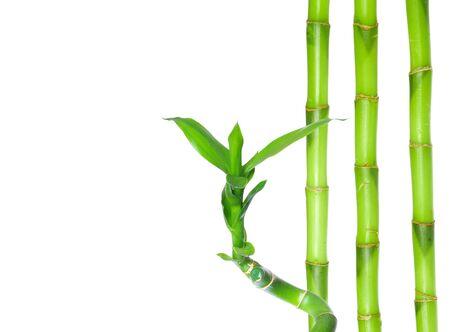 bambù verde isolato su sfondo bianco white