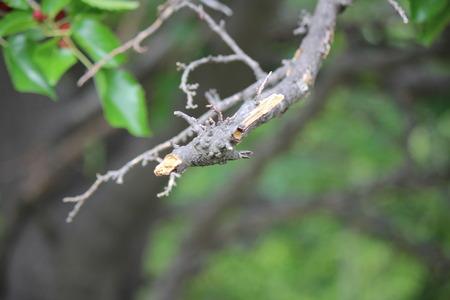 Broken little tree branch closeup