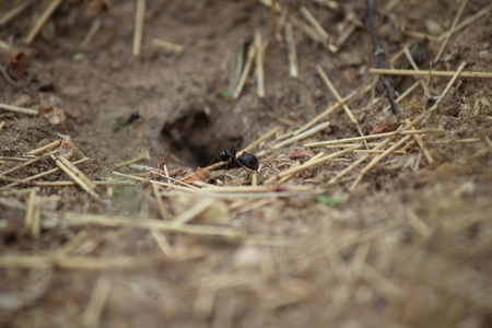The ant goes into the hole