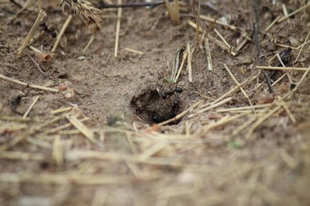 The ant near the burrow