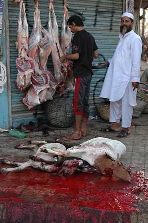 KARACHI/PAKISTAN_  Pakistanies celebrate Holy Eid, Eid-al-Adha with sacrificies Animals as old tradition from prophet Abrahim sacrifies his son Ismail to God, Pakistani celebrate Eid-al-Adha today and meat will distribute to among friends families and poo Stock Photo - 15944834