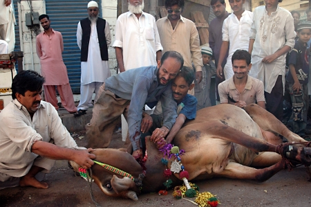 KARACHI/PAKISTAN_  Pakistanies celebrate Holy Eid, Eid-al-Adha with sacrificies Animals as old tradition from prophet Abrahim sacrifies his son Ismail to God, Pakistani celebrate Eid-al-Adha today and meat will distribute to among friends families and poo Stock Photo - 15944832