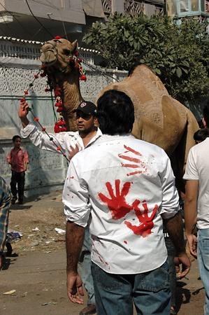slaughtering: KARACHI  PAKISTAN_ pakistano animale Camel MACELLAZIONI il 2 ? giorno di Eid-al-Adha in Pakistanies celebrare Santo Eid, Eid-al-Adha con gli animali sacrificies come tradizione dal profeta Abrahim sacrifica suo figlio Ismail a Dio, pakistana celebrare Eid-al-Adha toda Editoriali