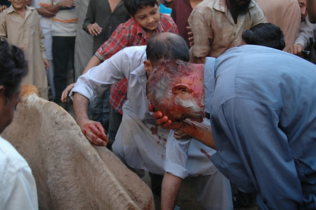 slaughtering: KARACHI  PAKISTAN_ 3rd.day cammello macellazione di sacrifici in riual religioso a celebrare l'Eid-al-Adha a il lunedi Azam Basti 29 Ottobre 2012