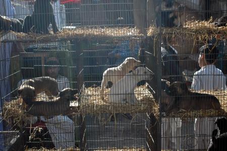 KARACHIPAKISTAN_ Birds and animal market place at empress market saddar  11 Feb 2013