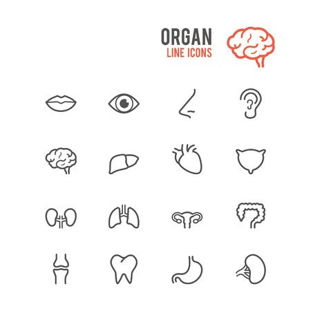 intestino: Icono de órganos establecido. Ilustración del vector.