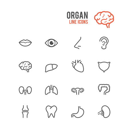 body line: Organ icon set. Vector illustration.