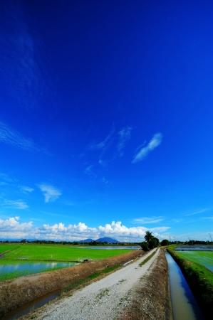 padi: Morning view at padi field