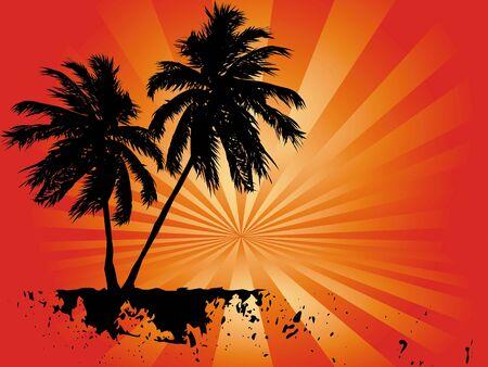 tropical palms photo