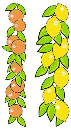 오렌지와 레몬 흰색 배경에 아직도 인생의 그림
