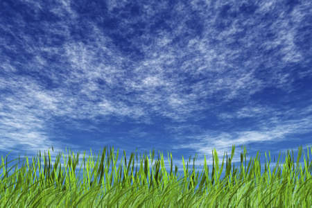 grass and cloudy sky  photo