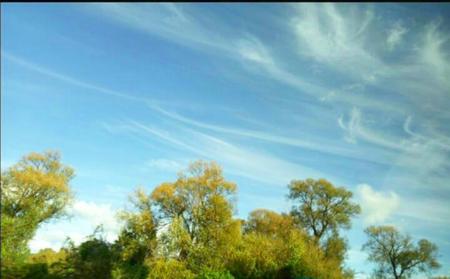 cloud like heart Love blue sky view background  Meadow tree Banco de Imagens