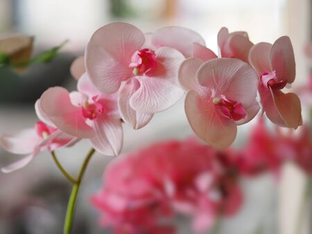 Pink orchid flower bouquet beautiful on blurred of background Фото со стока