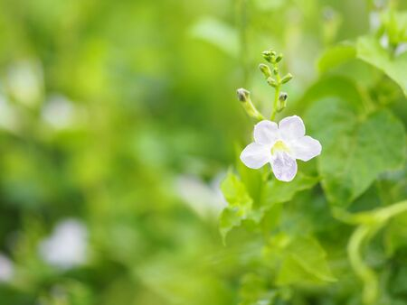 White and purple small flower on blurred of nature background 版權商用圖片 - 131364162